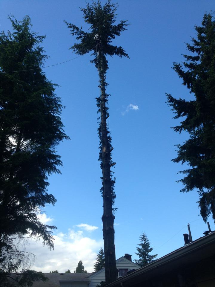 "I call this one ""Northwest palm tree."""
