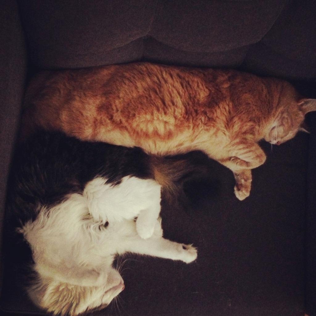 Cat snuggle.