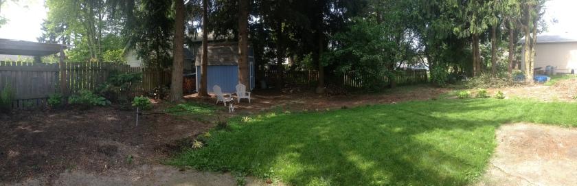 Backyard_Lawn