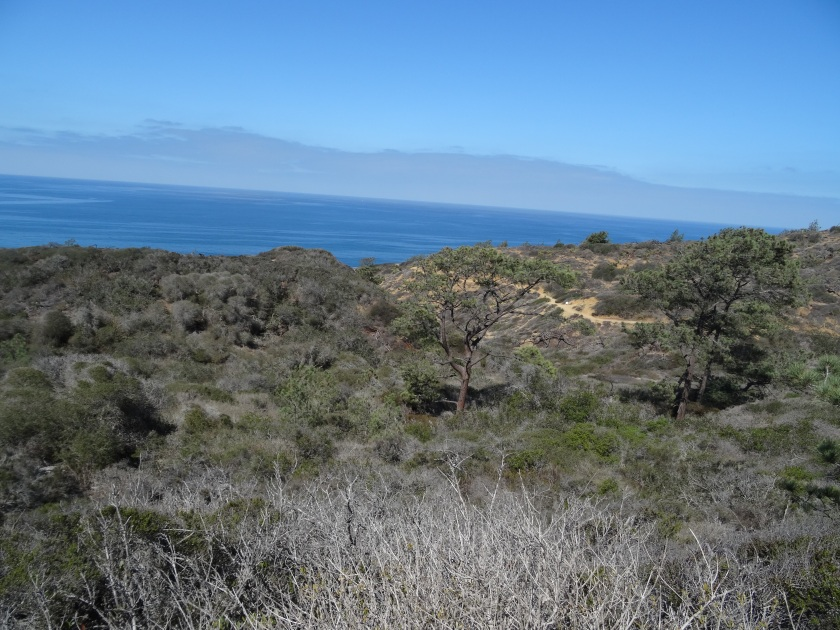 View from Torrey Pines State Reserve.