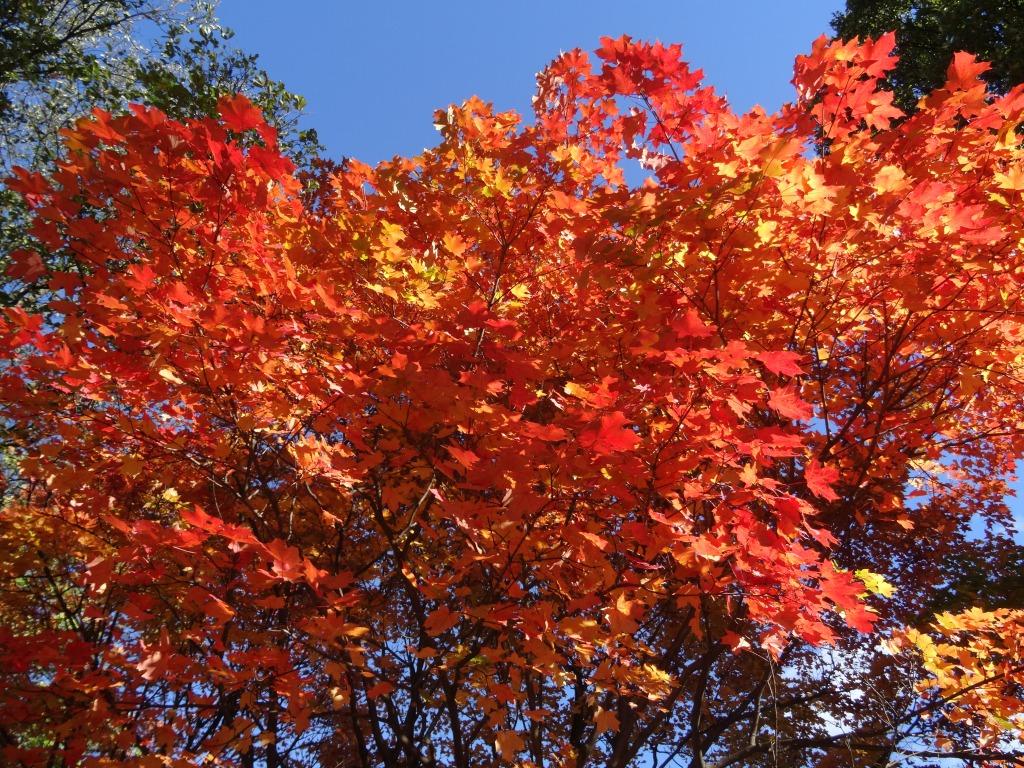 Autumn in Washington DC.
