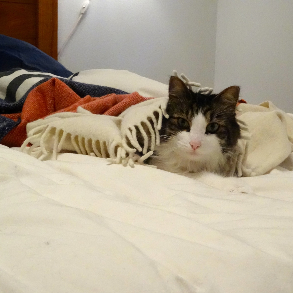 Cat snuggled under a blanket.